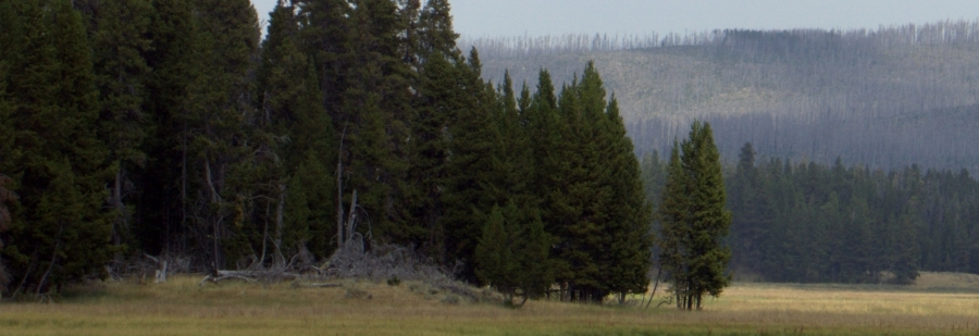 USA – Yellowstone National Park
