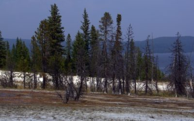 Le sud de Yellowstone – Wyoming